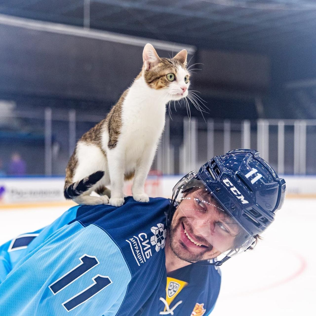 Фото Хоккеисты «Сибири» устроили фотосессию с бездомными животными в Новосибирске 4
