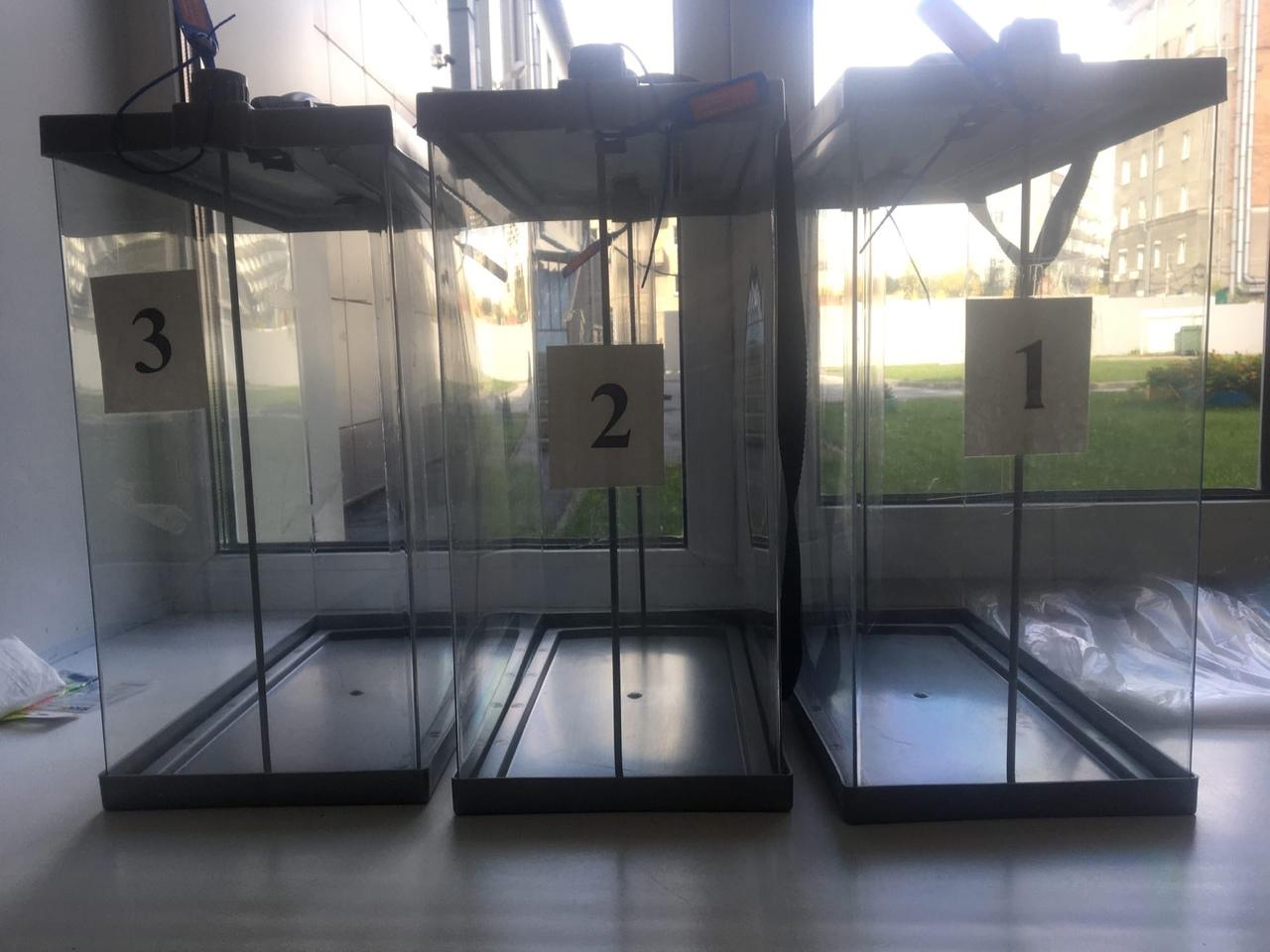 Фото Выборы в Новосибирске: онлайн дня голосования за депутатов Госдумы 19 сентября 2021 года 66